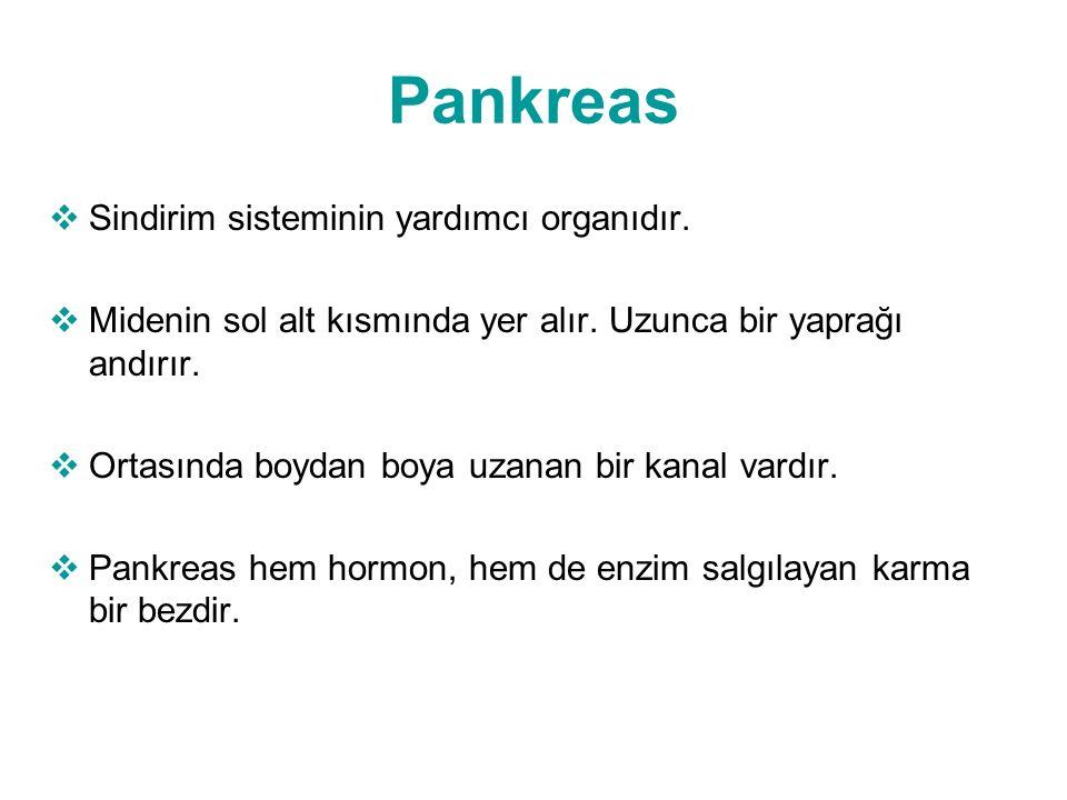 Pankreas  Sindirim sisteminin yardımcı organıdır.  Midenin sol alt kısmında yer alır. Uzunca bir yaprağı andırır.  Ortasında boydan boya uzanan bir