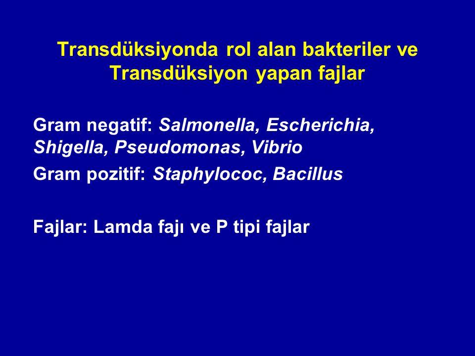 Transdüksiyonda rol alan bakteriler ve Transdüksiyon yapan fajlar Gram negatif: Salmonella, Escherichia, Shigella, Pseudomonas, Vibrio Gram pozitif: S