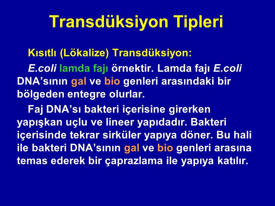 Transdüksiyon Tipleri Kısıtlı (Lökalize) Transdüksiyon: E.coli lamda fajı örnektir. Lamda fajı E.coli DNA'sının gal ve bio genleri arasındaki bir bölg
