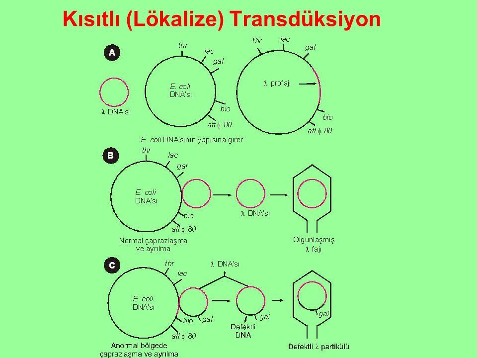 Kısıtlı (Lökalize) Transdüksiyon