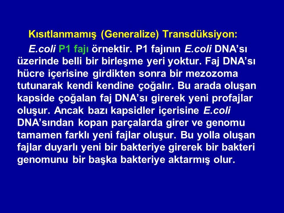 Kısıtlanmamış (Generalize) Transdüksiyon: E.coli P1 fajı örnektir. P1 fajının E.coli DNA'sı üzerinde belli bir birleşme yeri yoktur. Faj DNA'sı hücre