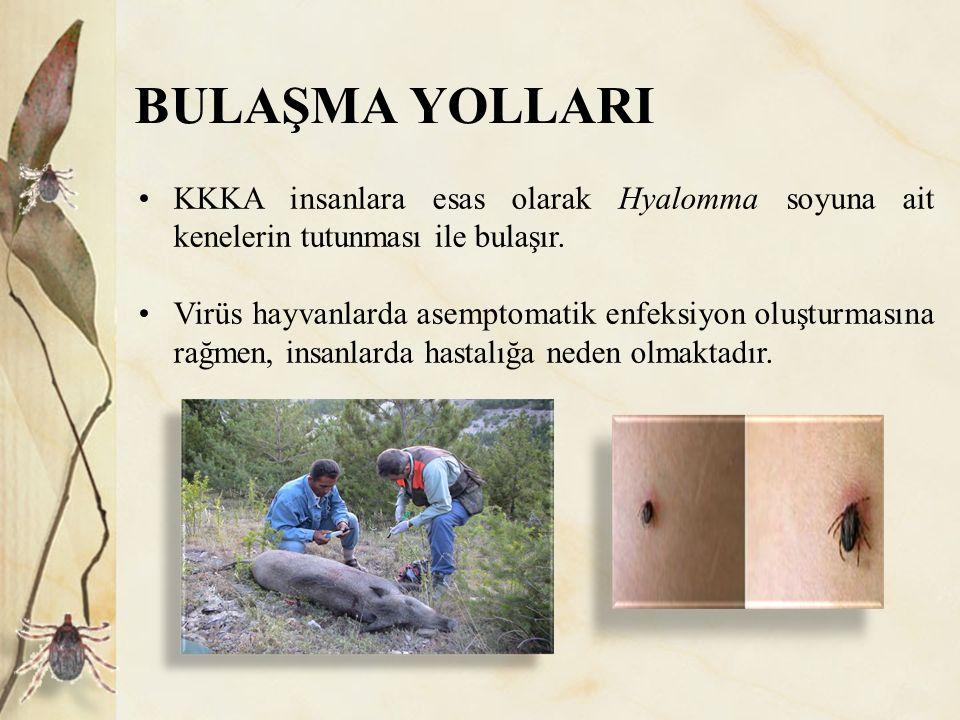 BULAŞMA YOLLARI KKKA insanlara esas olarak Hyalomma soyuna ait kenelerin tutunması ile bulaşır. Virüs hayvanlarda asemptomatik enfeksiyon oluşturmasın