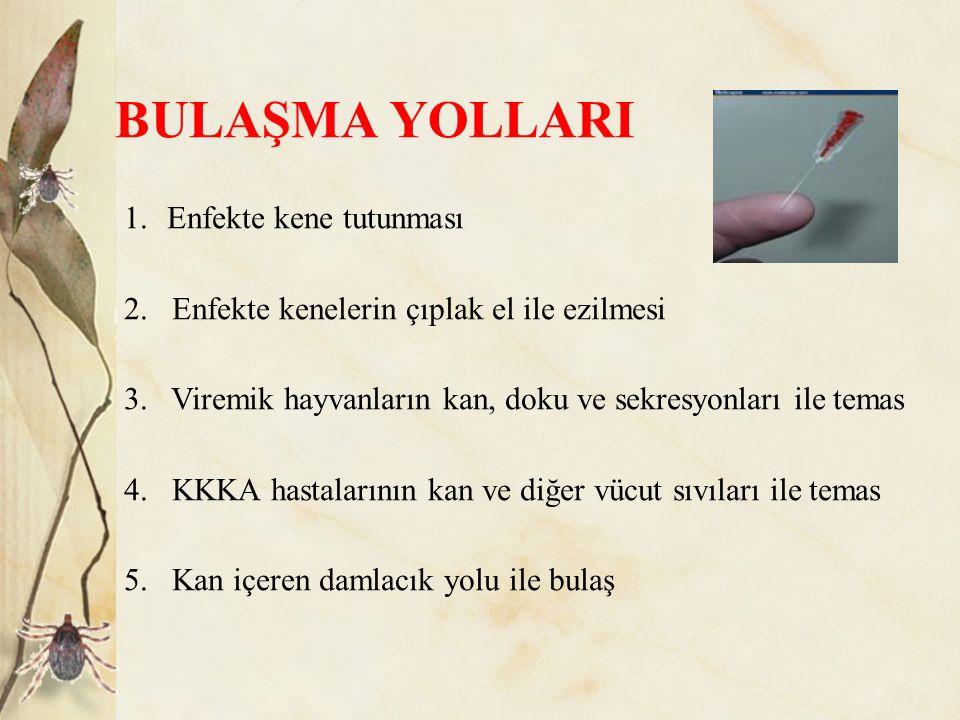 BULAŞMA YOLLARI 1. Enfekte kene tutunması 2. Enfekte kenelerin çıplak el ile ezilmesi 3. Viremik hayvanların kan, doku ve sekresyonları ile temas 4. K