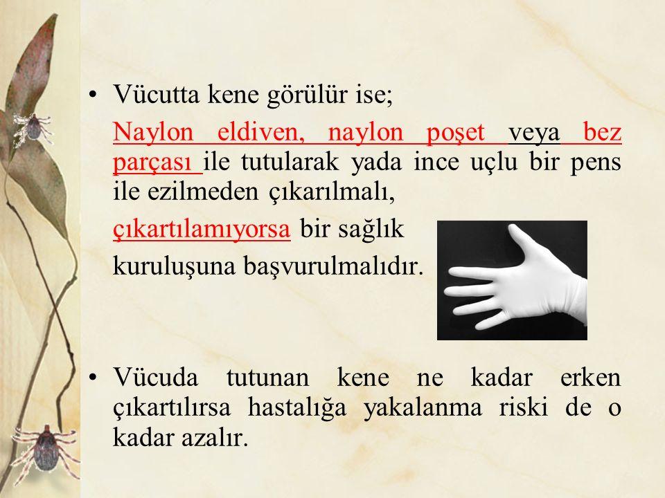 Vücutta kene görülür ise; Naylon eldiven, naylon poşet veya bez parçası ile tutularak yada ince uçlu bir pens ile ezilmeden çıkarılmalı, çıkartılamıyo