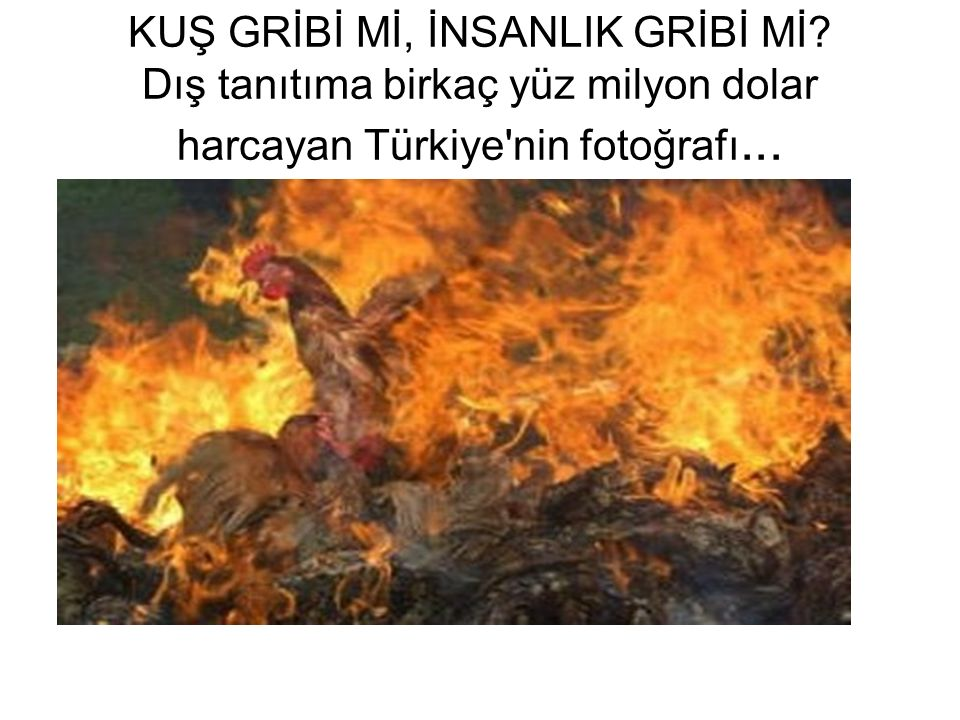 KUŞ GRİBİ Mİ, İNSANLIK GRİBİ Mİ? Dış tanıtıma birkaç yüz milyon dolar harcayan Türkiye'nin fotoğrafı...