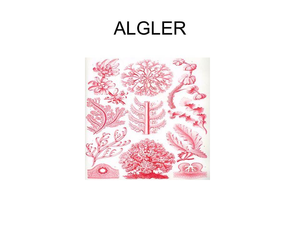 ALGLER