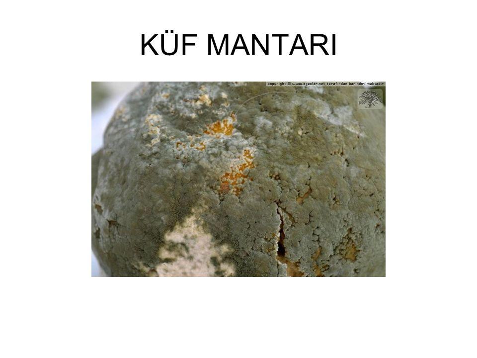 KÜF MANTARI