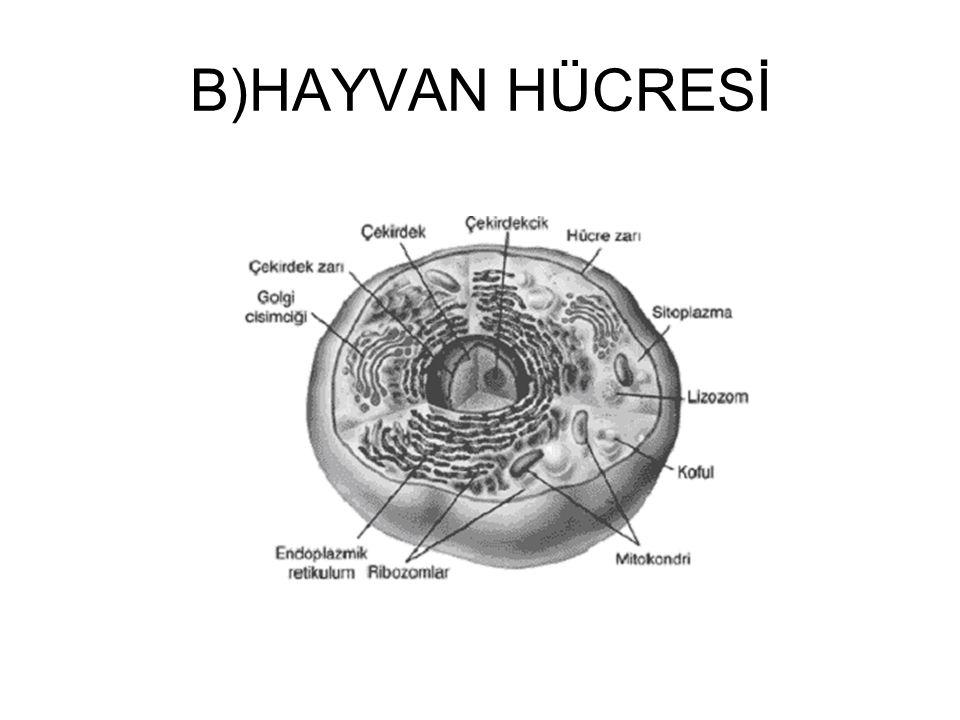 1.BAKTERİLER Bakteriler