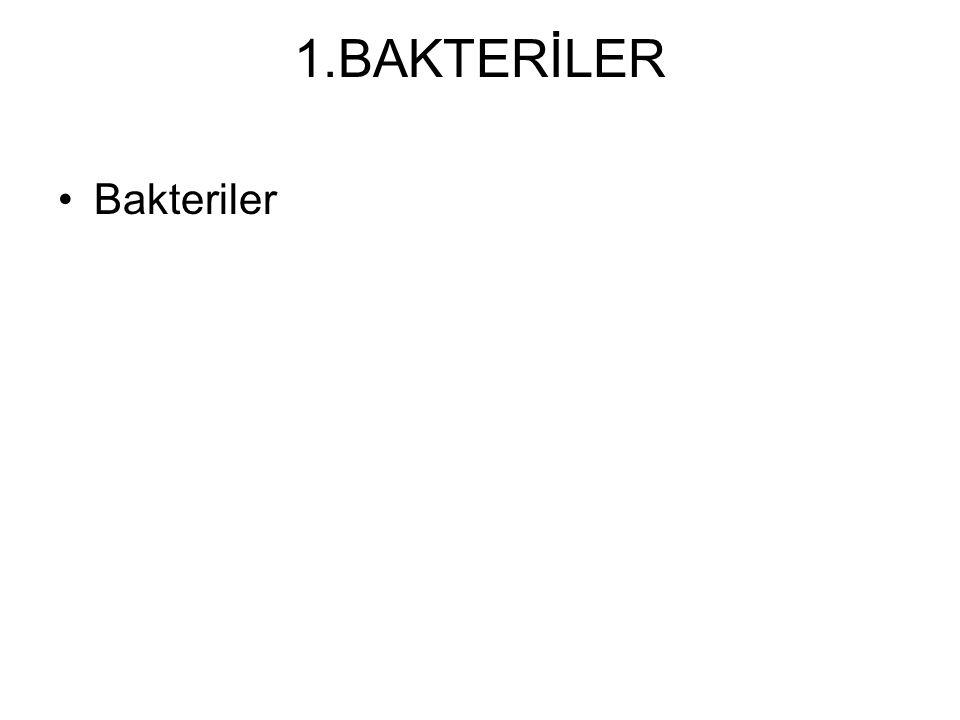 BAKTERİ