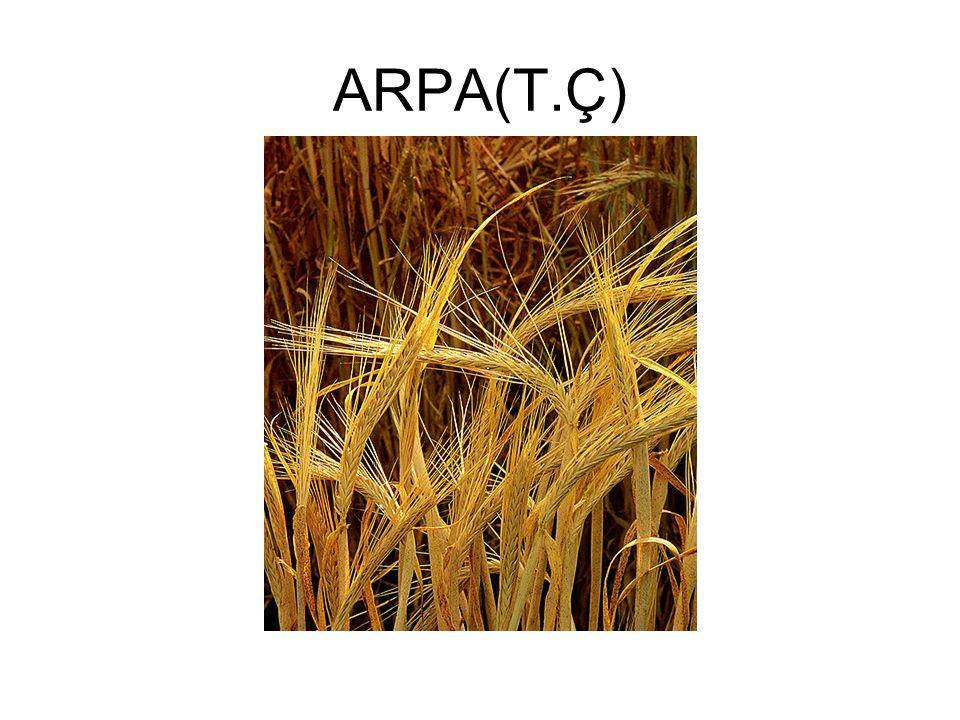 ARPA(T.Ç)