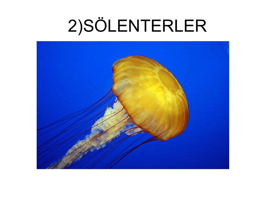 2)SÖLENTERLER