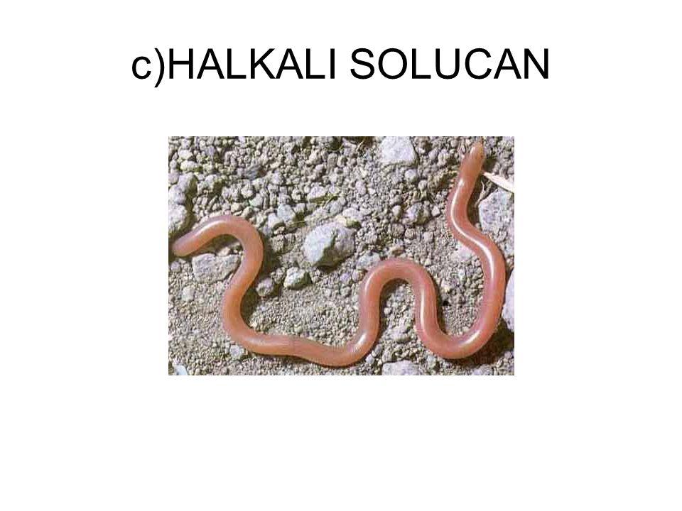c)HALKALI SOLUCAN