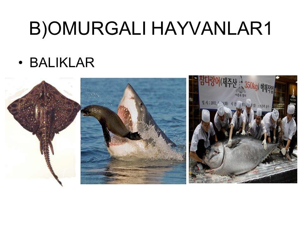 B)OMURGALI HAYVANLAR1 BALIKLAR