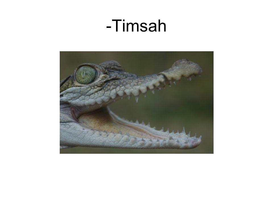 -Timsah