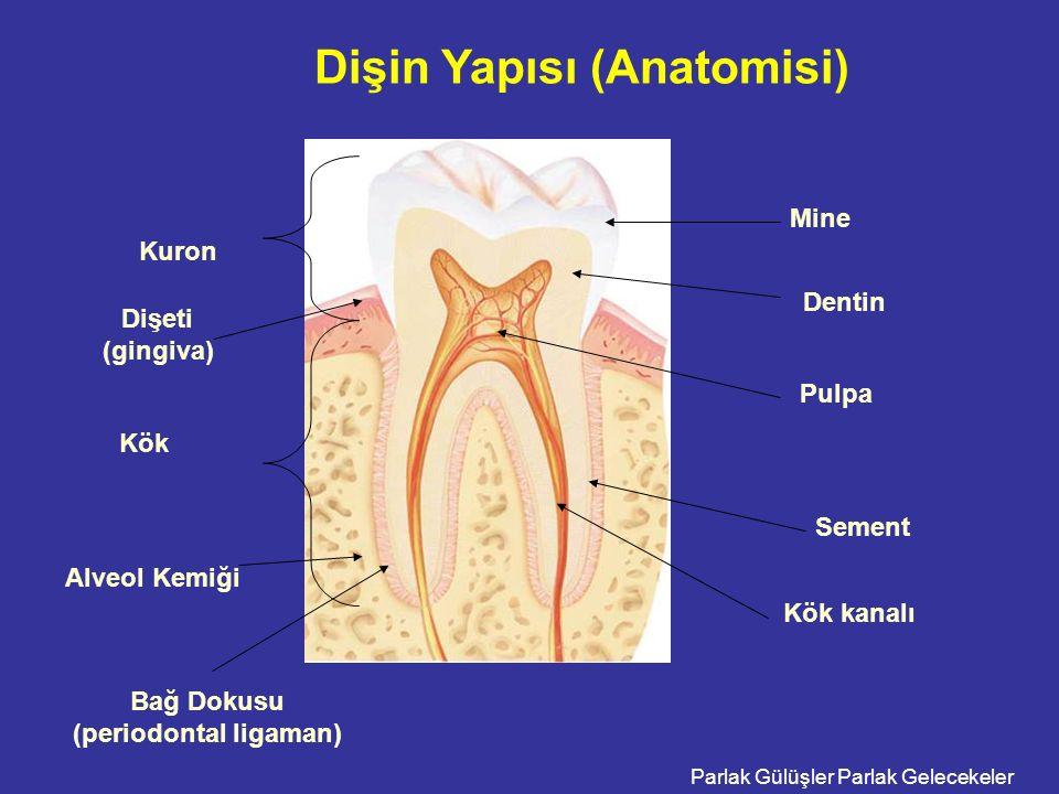 Parlak Gülüşler Parlak Gelecekeler Dişin Yapısı (Anatomisi) Kuron Kök Pulpa Mine Dentin Sement Dişeti (gingiva) Alveol Kemiği Kök kanalı Bağ Dokusu (periodontal ligaman)