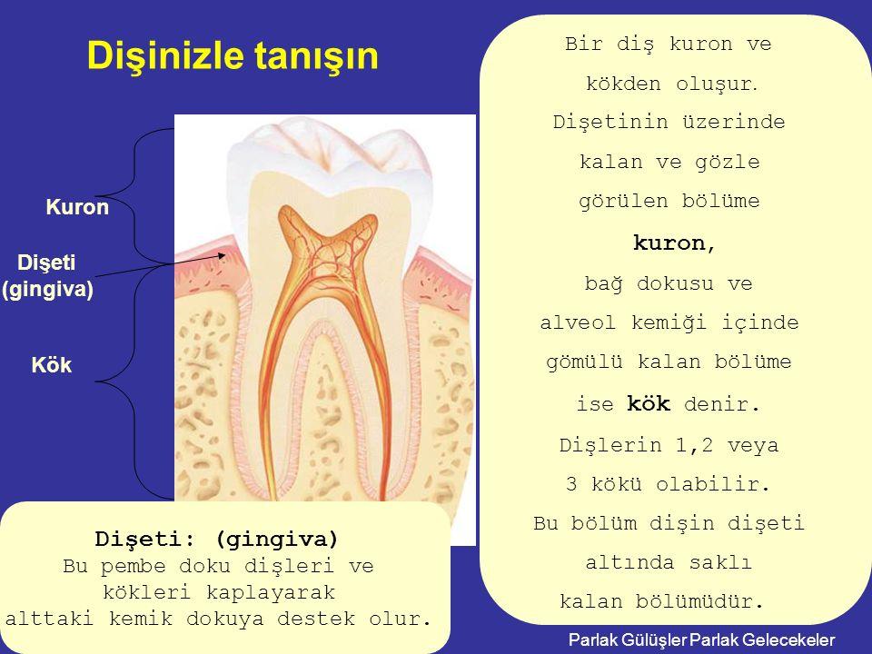Parlak Gülüşler Parlak Gelecekeler Kuron Kök Bir diş kuron ve kökden oluşur. Dişetinin üzerinde kalan ve gözle görülen bölüme kuron, bağ dokusu ve alv