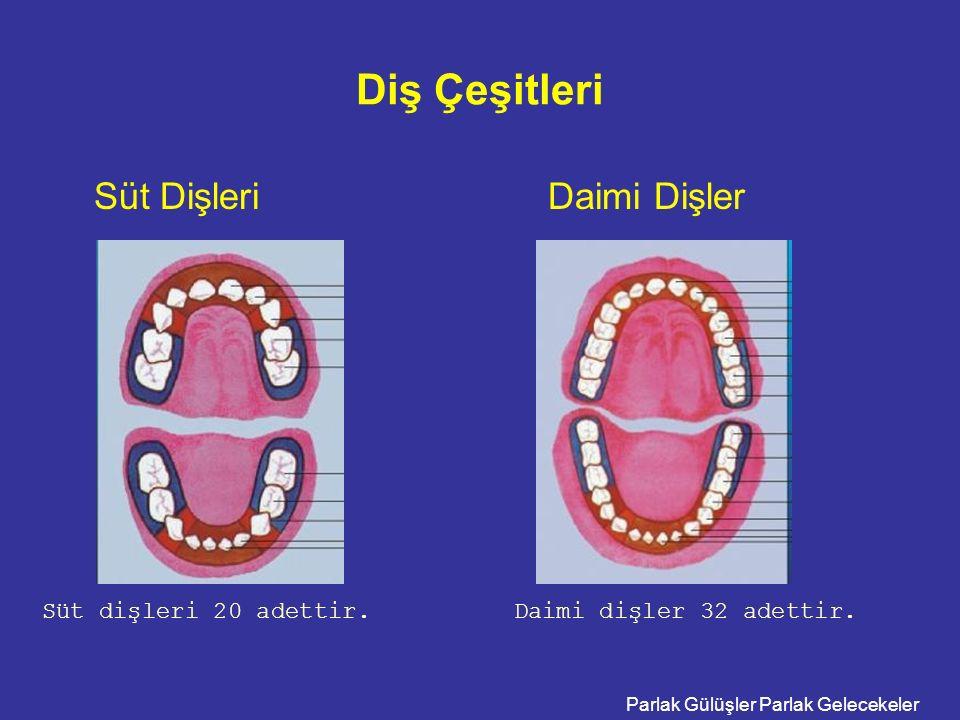 Parlak Gülüşler Parlak Gelecekeler Diş Çeşitleri Süt Dişleri Daimi Dişler Süt dişleri 20 adettir.Daimi dişler 32 adettir.