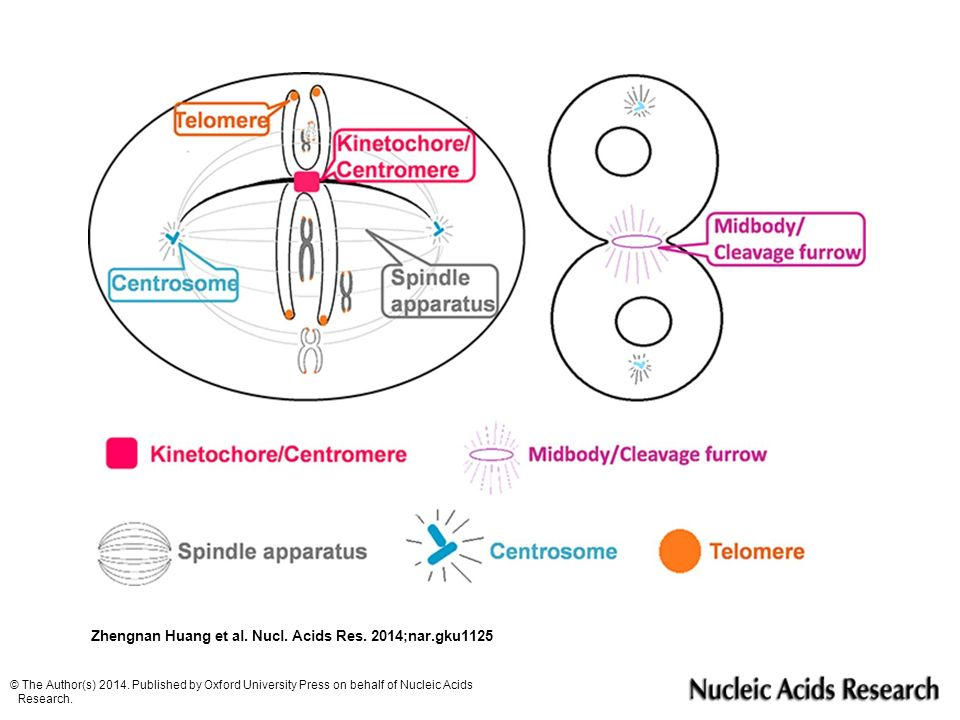 Zhengnan Huang et al. Nucl. Acids Res. 2014;nar.gku1125 © The Author(s) 2014. Published by Oxford University Press on behalf of Nucleic Acids Research