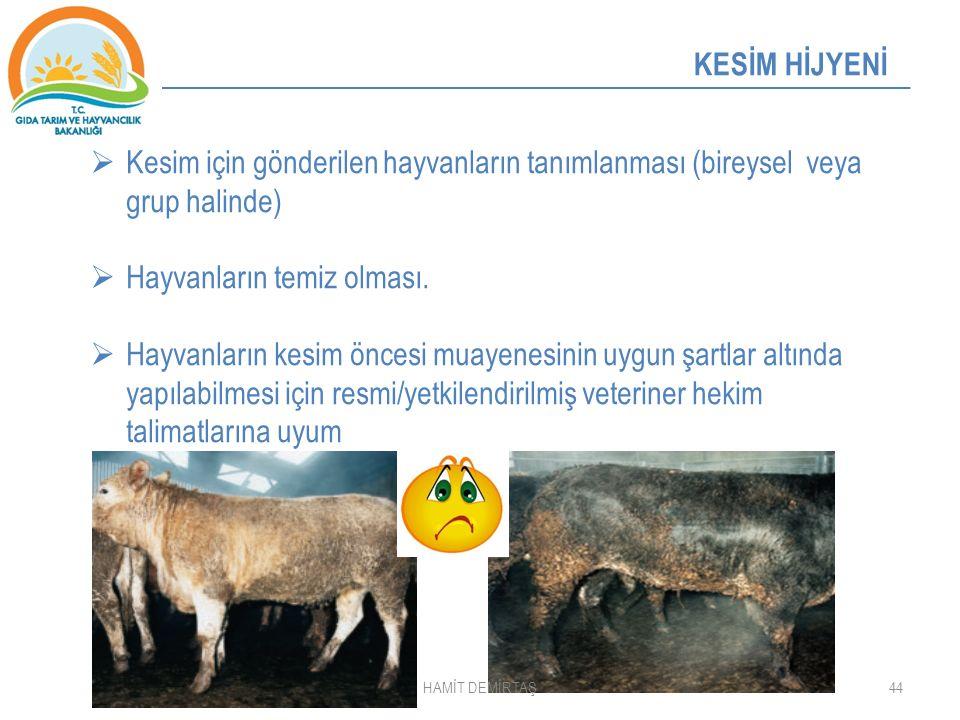 44 KESİM HİJYENİ  Kesim için gönderilen hayvanların tanımlanması (bireysel veya grup halinde)  Hayvanların temiz olması.  Hayvanların kesim öncesi