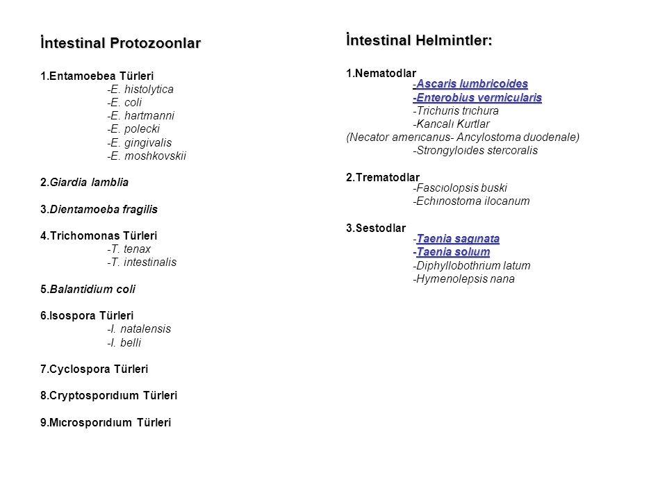 İntestinal Protozoonlar 1.Entamoebea Türleri -E. histolytica -E.