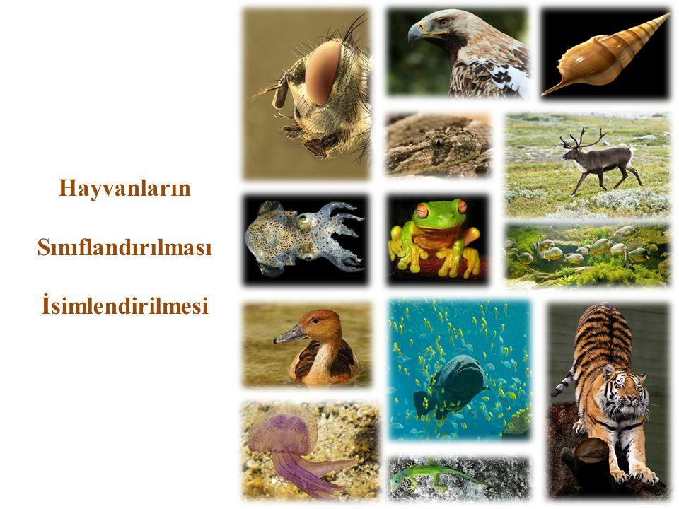 Hayvanların Sınıflandırılması İsimlendirilmesi