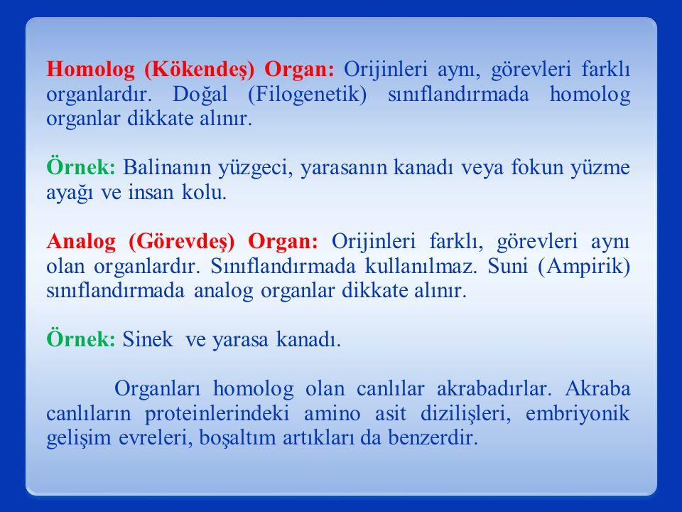 Homolog (Kökendeş) Organ: Orijinleri aynı, görevleri farklı organlardır. Doğal (Filogenetik) sınıflandırmada homolog organlar dikkate alınır. Örnek: B