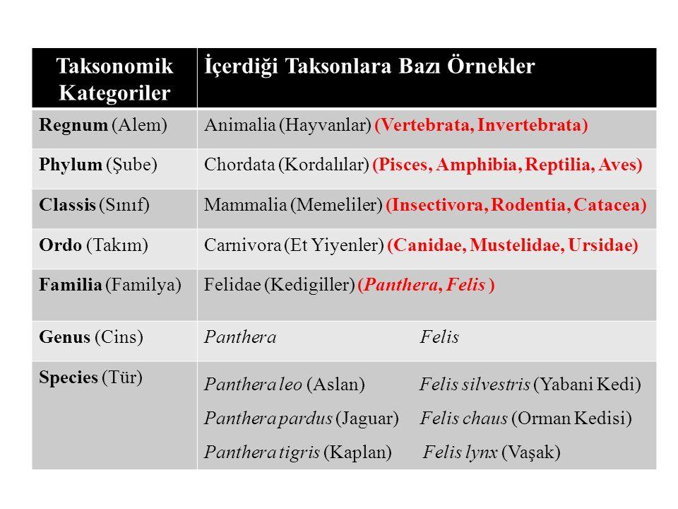 Taksonomik Kategoriler İçerdiği Taksonlara Bazı Örnekler Regnum (Alem)Animalia (Hayvanlar) (Vertebrata, Invertebrata) Phylum (Şube)Chordata (Kordalıla