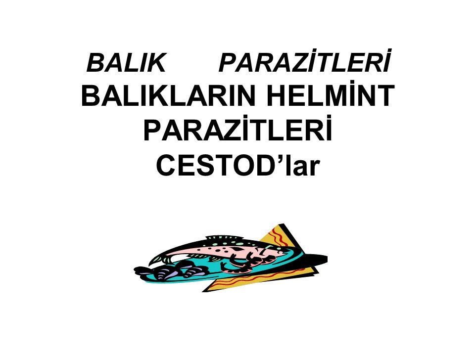 BALIK PARAZİTLERİ BALIKLARIN HELMİNT PARAZİTLERİ CESTOD'lar