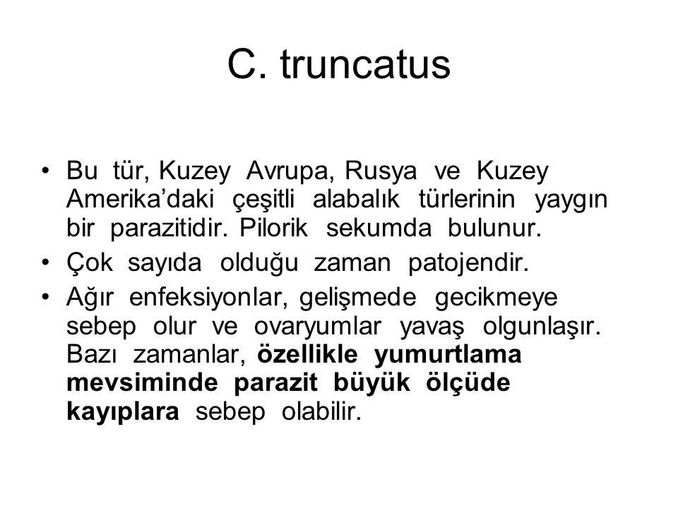 C. truncatus Bu tür, Kuzey Avrupa, Rusya ve Kuzey Amerika'daki çeşitli alabalık türlerinin yaygın bir parazitidir. Pilorik sekumda bulunur. Çok sayıda