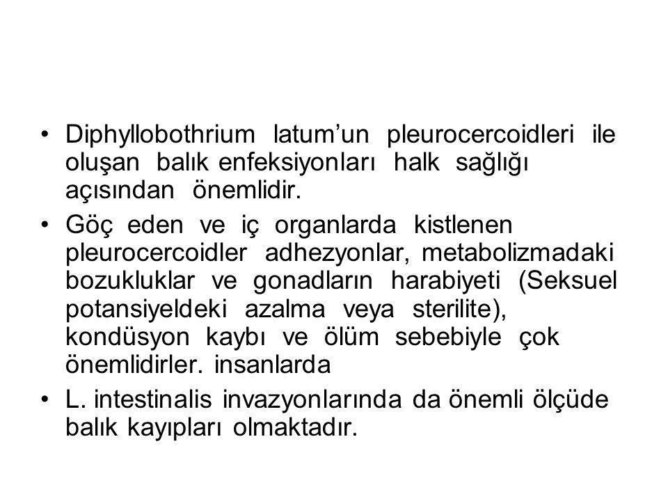 Diphyllobothrium latum'un pleurocercoidleri ile oluşan balık enfeksiyonları halk sağlığı açısından önemlidir.