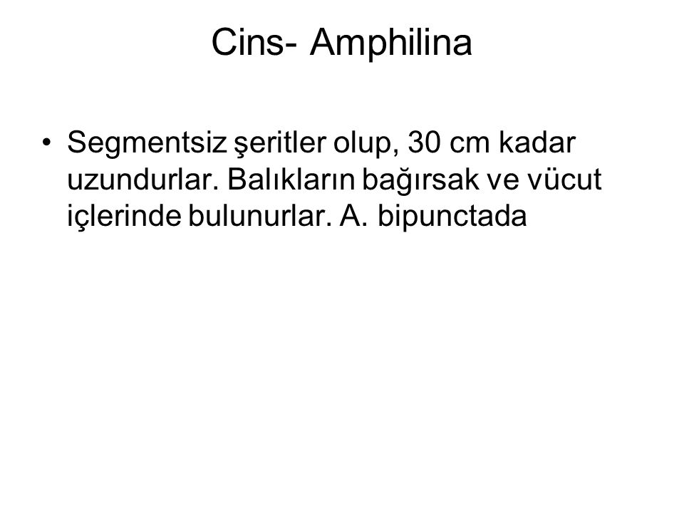 Cins- Amphilina Segmentsiz şeritler olup, 30 cm kadar uzundurlar.