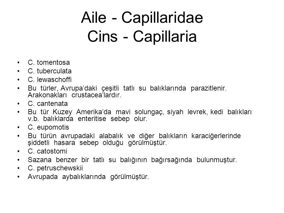 Aile - Capillaridae Cins - Capillaria C. tomentosa C.
