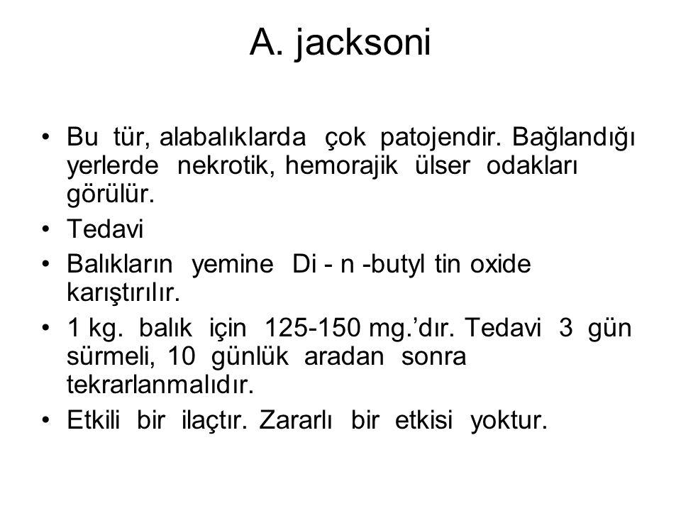 A. jacksoni Bu tür, alabalıklarda çok patojendir.
