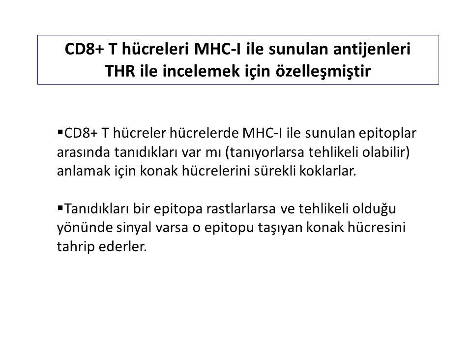 CD8+ T hücreler hücrelerde MHC-I ile sunulan epitoplar arasında tanıdıkları var mı (tanıyorlarsa tehlikeli olabilir) anlamak için konak hücrelerini