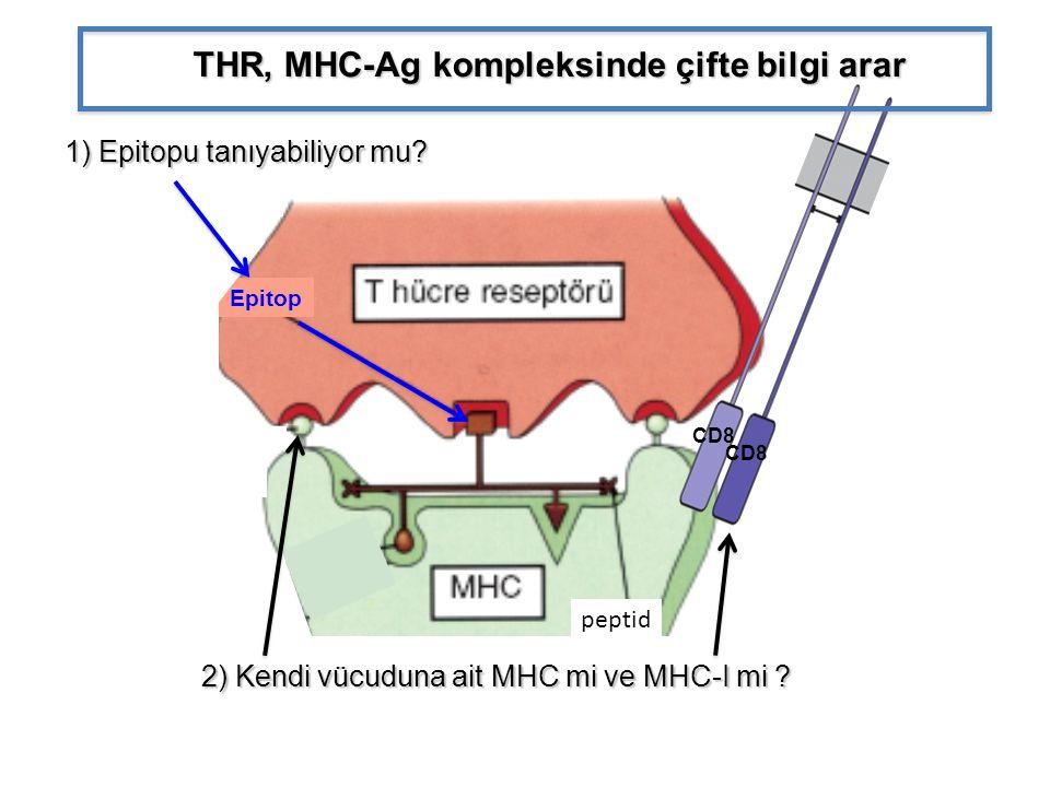 Epitop CD8 THR, MHC-Ag kompleksinde çifte bilgi arar 1) Epitopu tanıyabiliyor mu? 2) Kendi vücuduna ait MHC mi ve MHC-I mi ? 2) Kendi vücuduna ait MHC