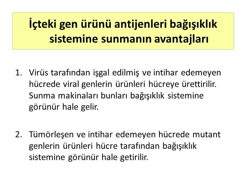 1.Virüs tarafından işgal edilmiş ve intihar edemeyen hücrede viral genlerin ürünleri hücreye ürettirilir. Sunma makinaları bunları bağışıklık sistemin