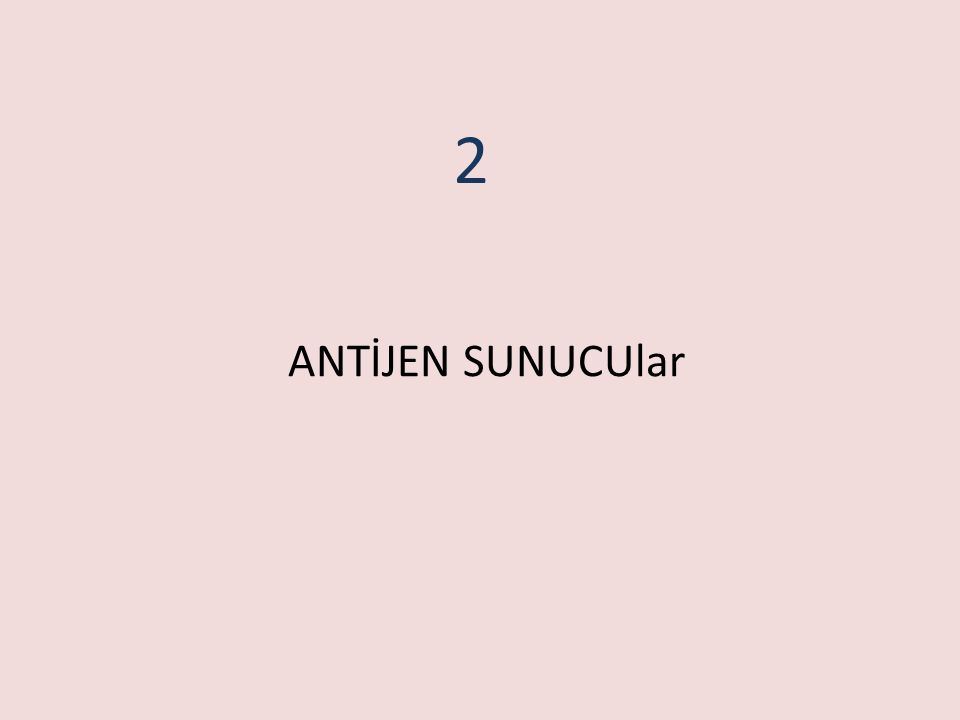 ANTİJEN SUNUCUlar 2