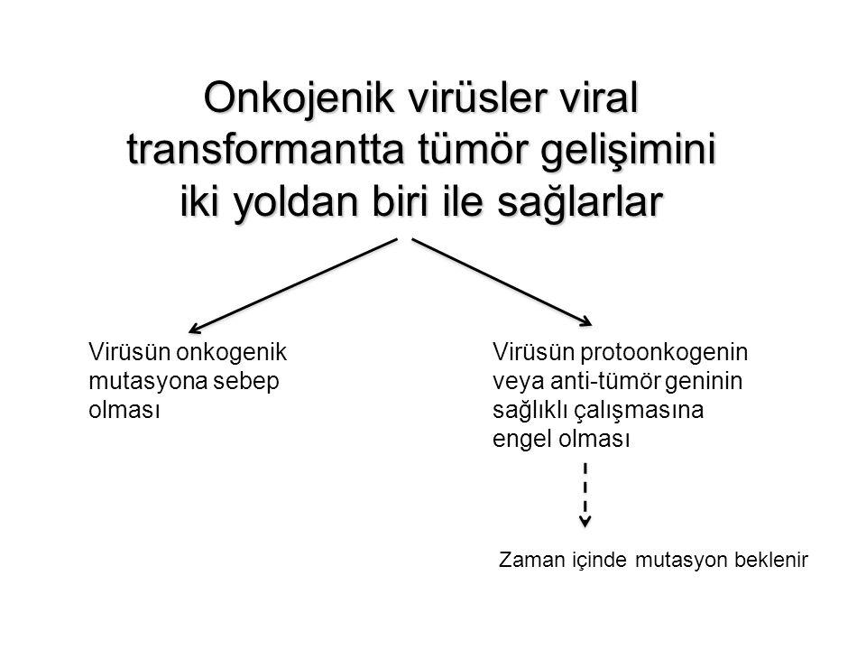 Onkojenik virüsler viral transformantta tümör gelişimini iki yoldan biri ile sağlarlar Virüsün onkogenik mutasyona sebep olması Virüsün protoonkogenin