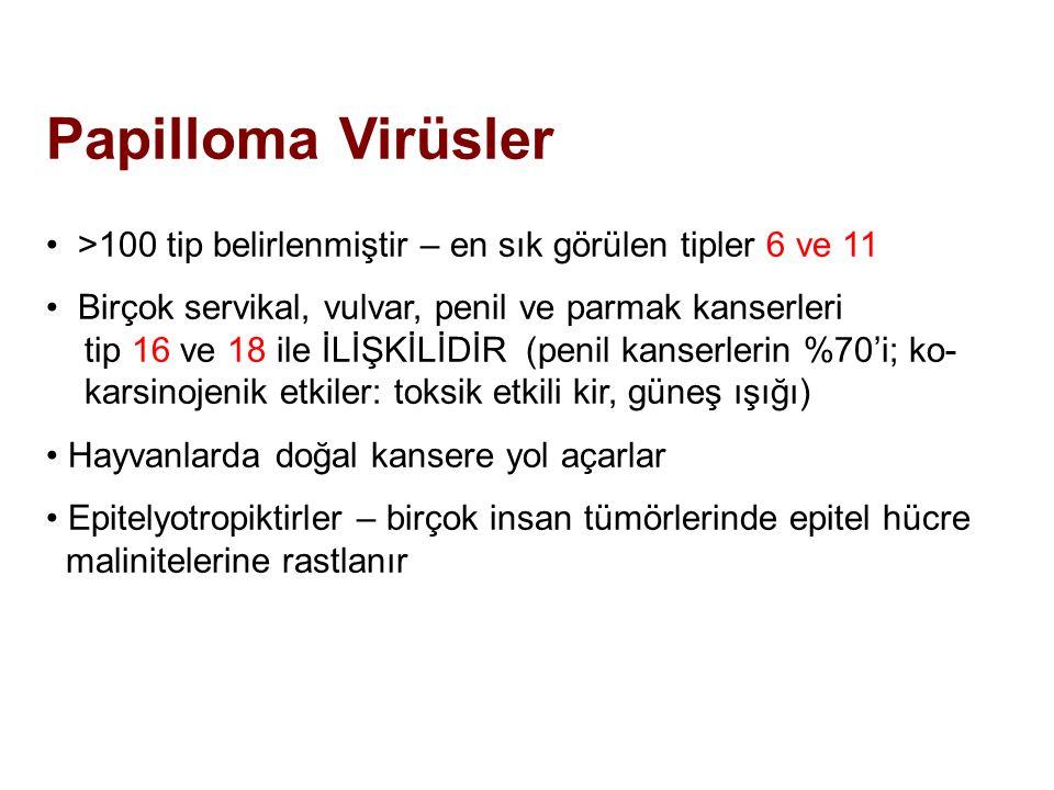 Papilloma Virüsler >100 tip belirlenmiştir – en sık görülen tipler 6 ve 11 Birçok servikal, vulvar, penil ve parmak kanserleri tip 16 ve 18 ile İLİŞKİ