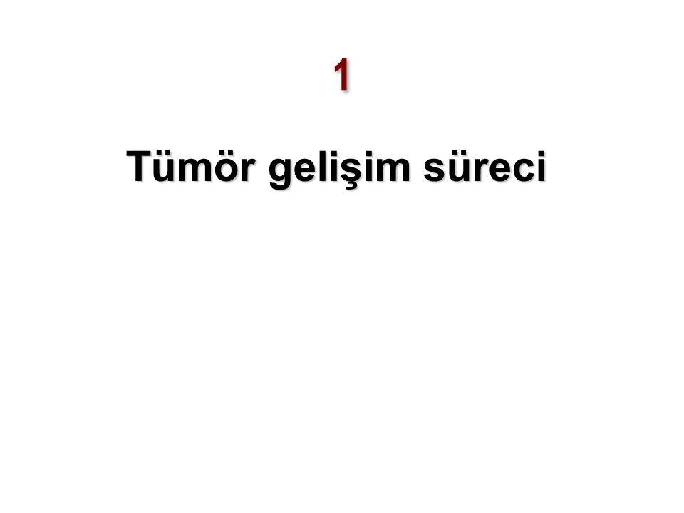 Lütfen 3 sayfalık Tümör Gelişim Patofizyolojisi sayfalarını okuyunuz Stresli hücre + Stres yanıtında yetersizlik  Hücresel hataların protoonkogenden onkogen oluşturması ve tümör hücresine dönüşüm  Anti-tümör yanıtında yetersizlik  Çoğul onkogenik mutasyonlar + İmmün yanıtın tümör tarafından modifikasyonu  Tümör çoğalması ve kanser gelişimi