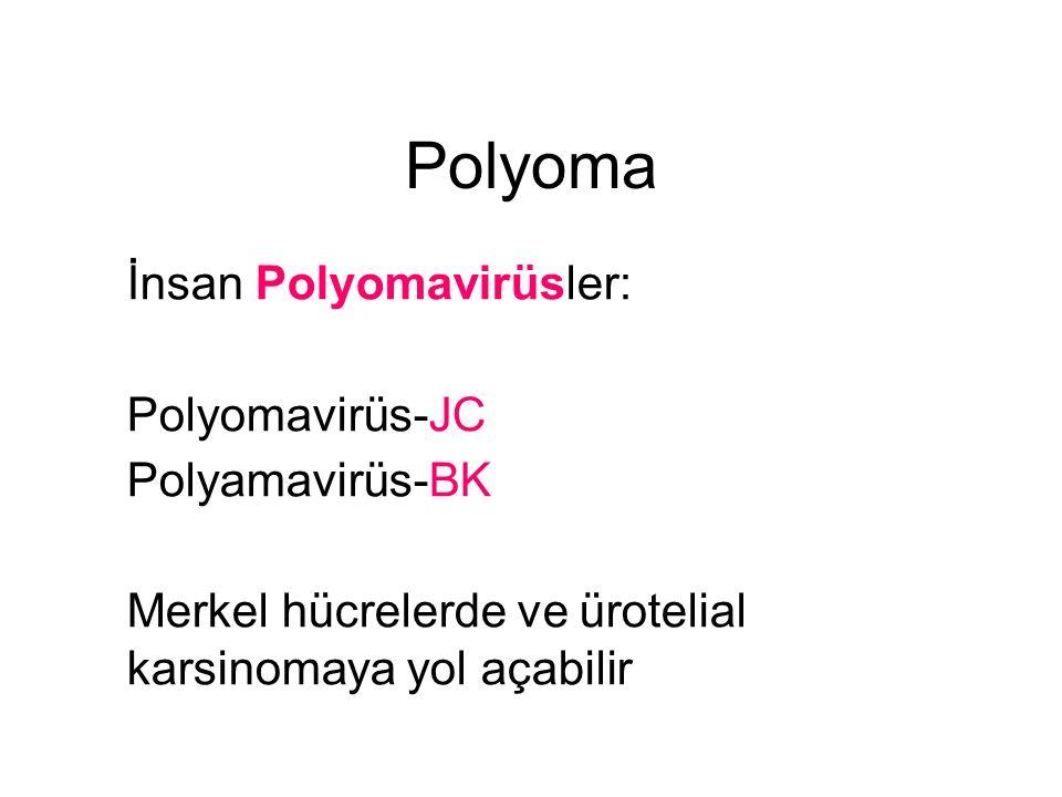 Polyoma İnsan Polyomavirüsler: Polyomavirüs-JC Polyamavirüs-BK Merkel hücrelerde ve ürotelial karsinomaya yol açabilir