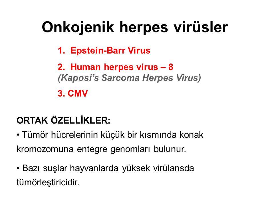 1. Epstein-Barr Virus 2. Human herpes virus – 8 (Kaposi's Sarcoma Herpes Virus) 3. CMV ORTAK ÖZELLİKLER: Tümör hücrelerinin küçük bir kısmında konak k