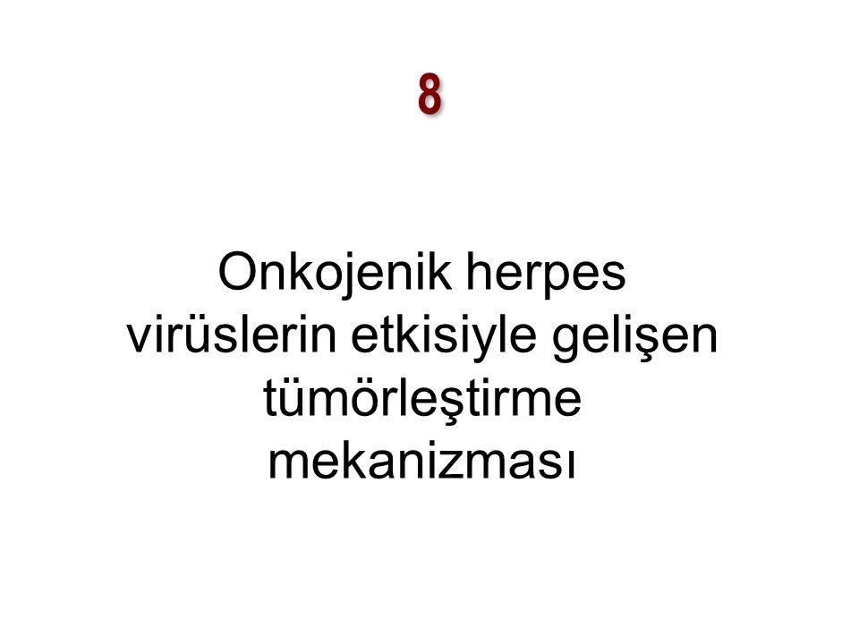 8 8 Onkojenik herpes virüslerin etkisiyle gelişen tümörleştirme mekanizması