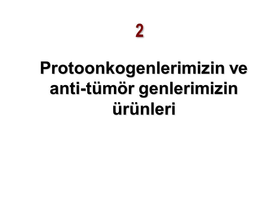 Hücre siklusunda protoonkogen ürünlerinin rol oynadığı noktalar ve dönemler 5 Hücre çoğalması Mitoz Bölünmeye hazırlık Genom replikasyonu Hücre bölünmesi G1 kontrol noktası G2 kontrol noktası M kontrol noktası