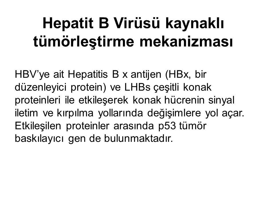 Hepatit B Virüsü kaynaklı tümörleştirme mekanizması HBV'ye ait Hepatitis B x antijen (HBx, bir düzenleyici protein) ve LHBs çeşitli konak proteinleri