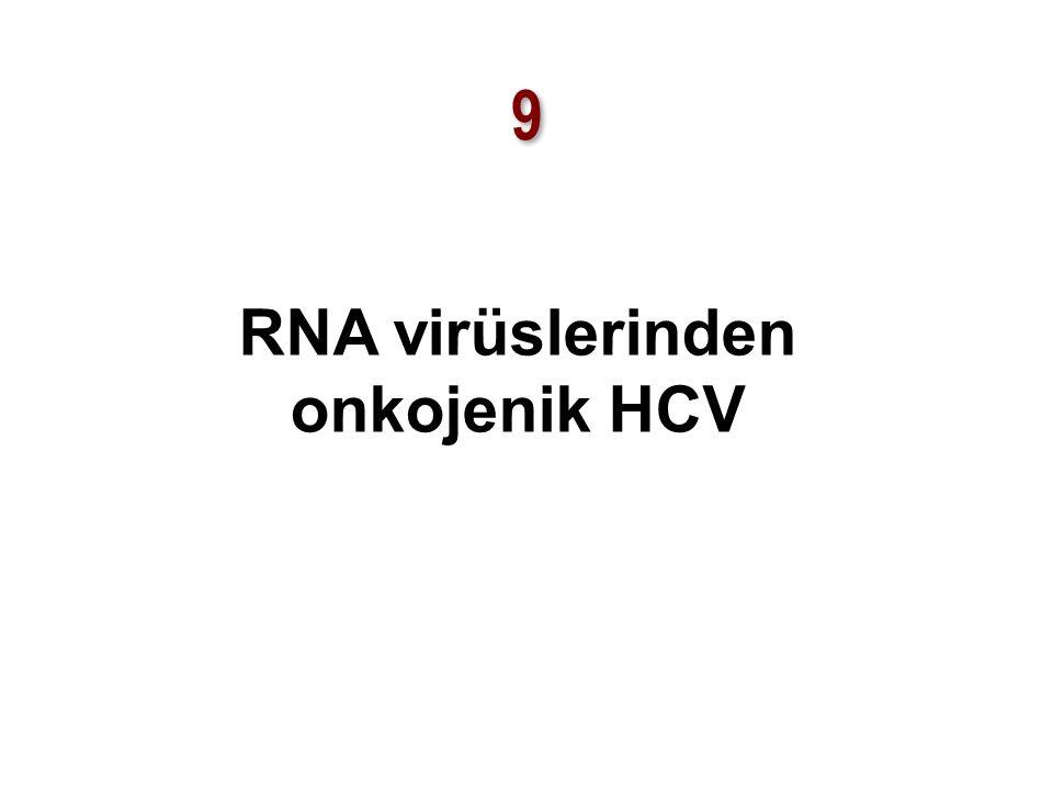 9 9 RNA virüslerinden onkojenik HCV