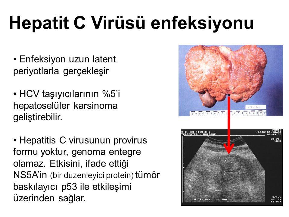 Hepatit C Virüsü enfeksiyonu Enfeksiyon uzun latent periyotlarla gerçekleşir HCV taşıyıcılarının %5'i hepatoselüler karsinoma geliştirebilir. Hepatiti