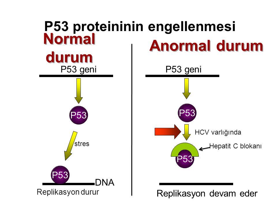P53 proteininin engellenmesi P53 geni P53 DNA Hepatit C blokanı P53 Normal durum Anormal durum stres Replikasyon durur HCV varlığında Replikasyon deva