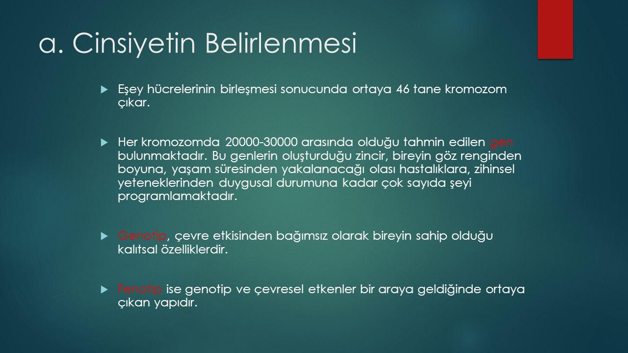 a. Cinsiyetin Belirlenmesi  Eşey hücrelerinin birleşmesi sonucunda ortaya 46 tane kromozom çıkar.