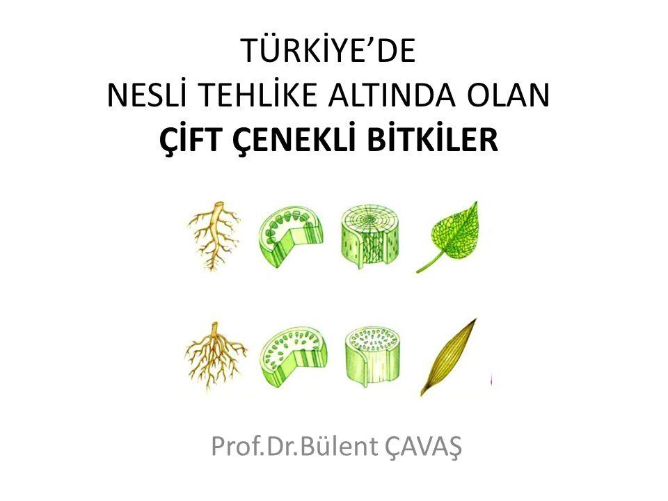 TÜRKİYE'DE NESLİ TEHLİKE ALTINDA OLAN ÇİFT ÇENEKLİ BİTKİLER Prof.Dr.Bülent ÇAVAŞ